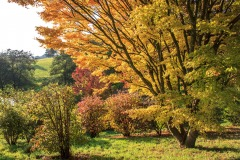 Castle Hill Gardens near South Molton in October