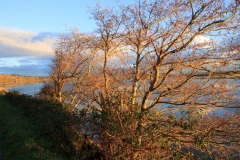 Taw Estuary near Chivenor. Jan 2019