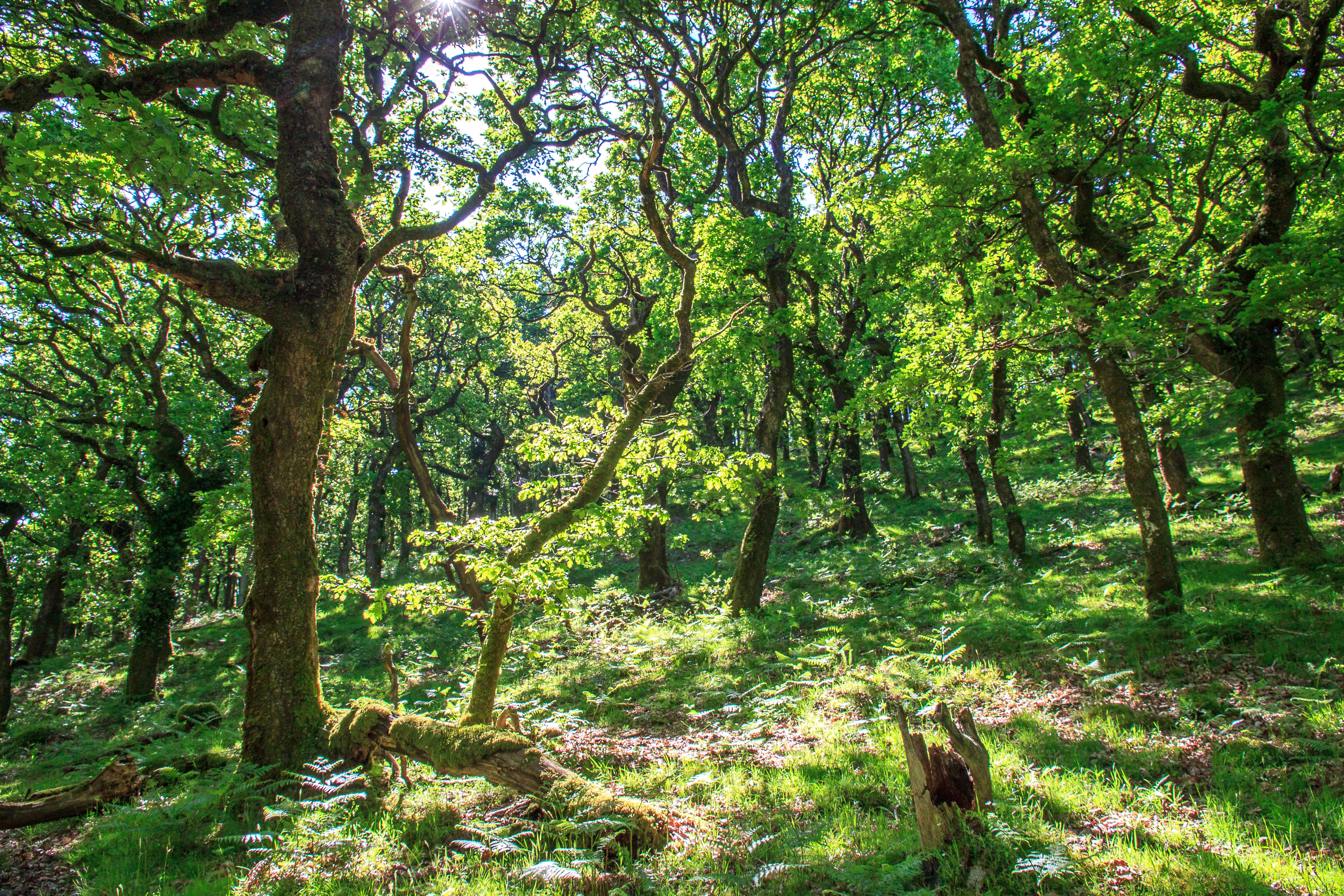 Woodland in the Doone Valley on Exmoor