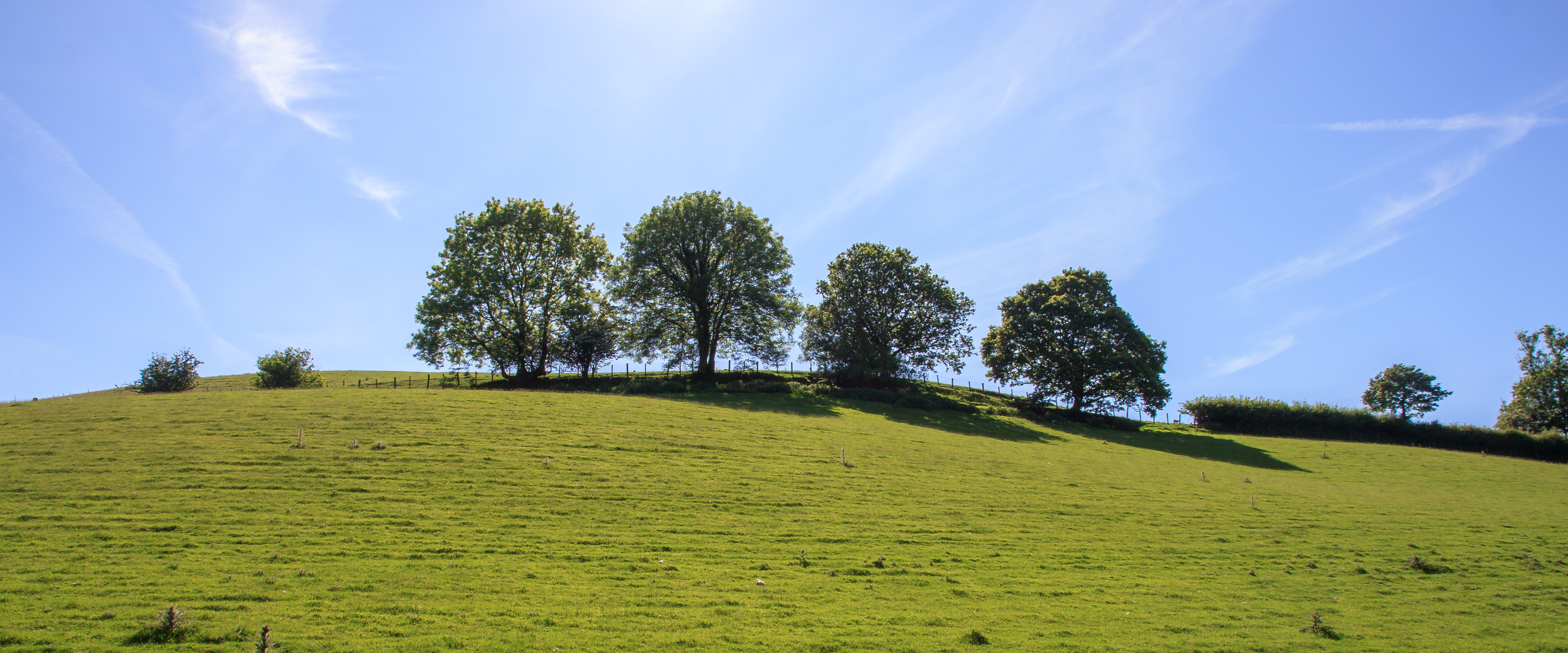 Trees above the Doone Valley on Exmoor