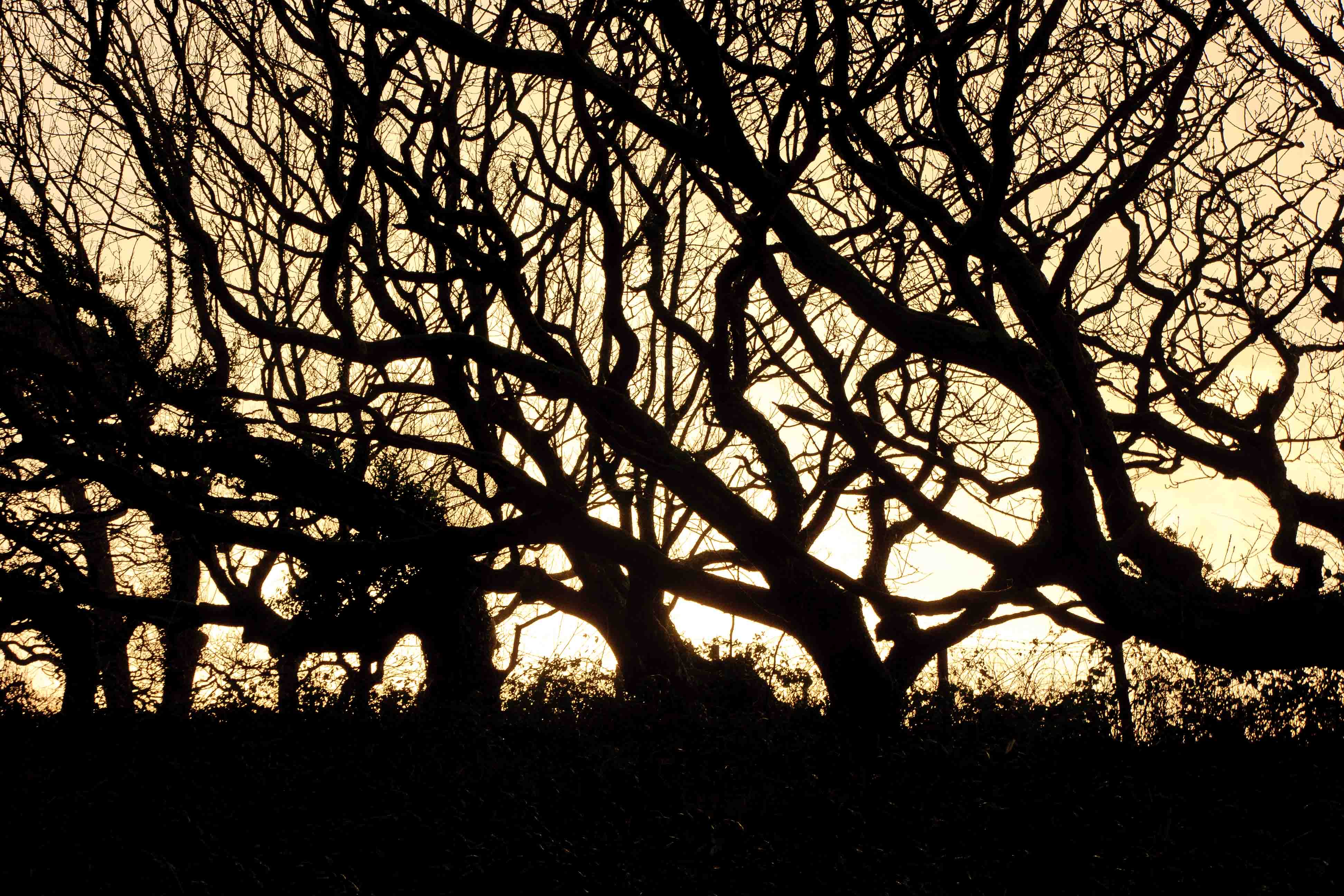 January: Chapel Wood near Georgeham