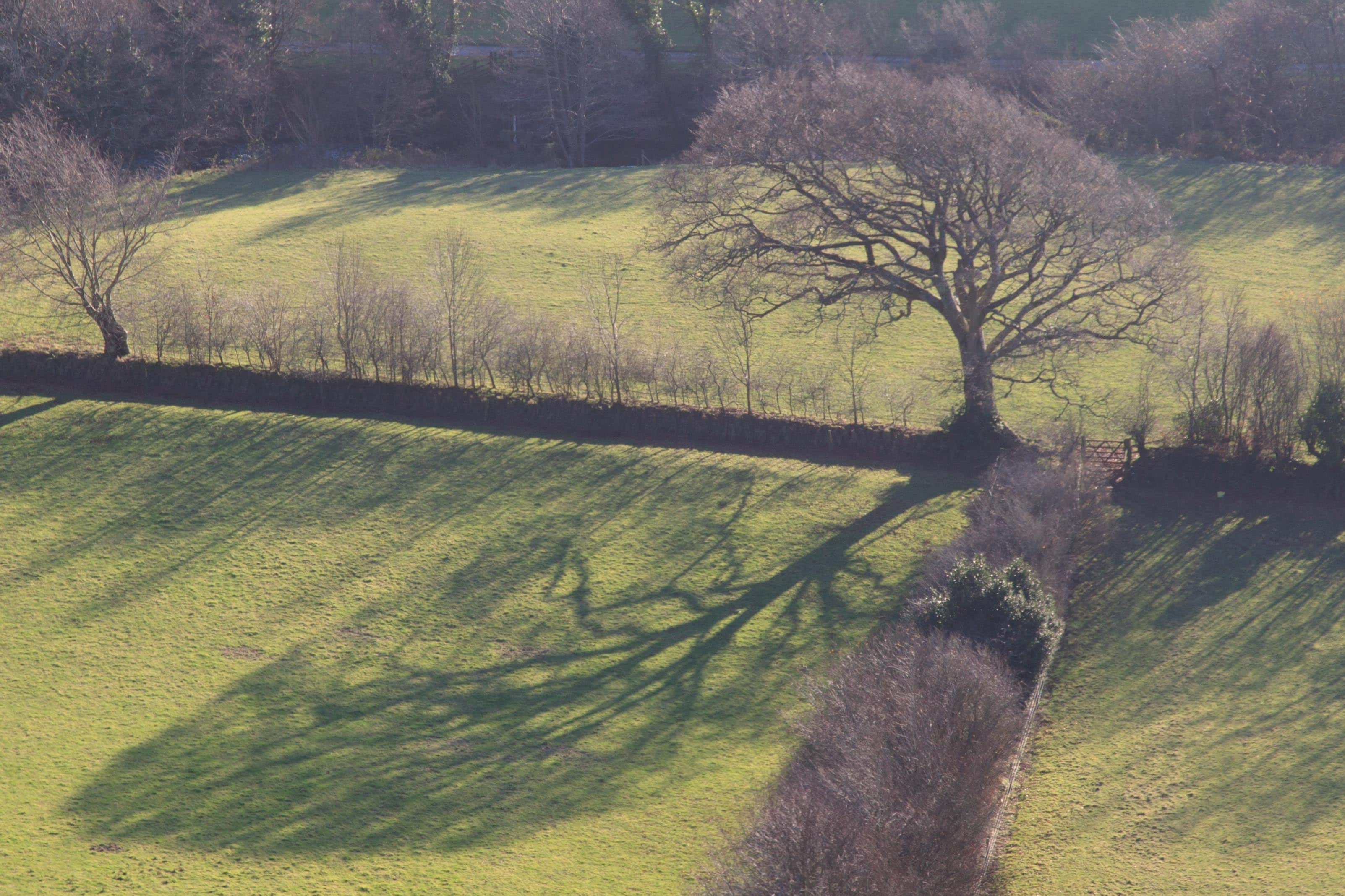 Trees and shadows  near Brendon, Exmoor. December 2014