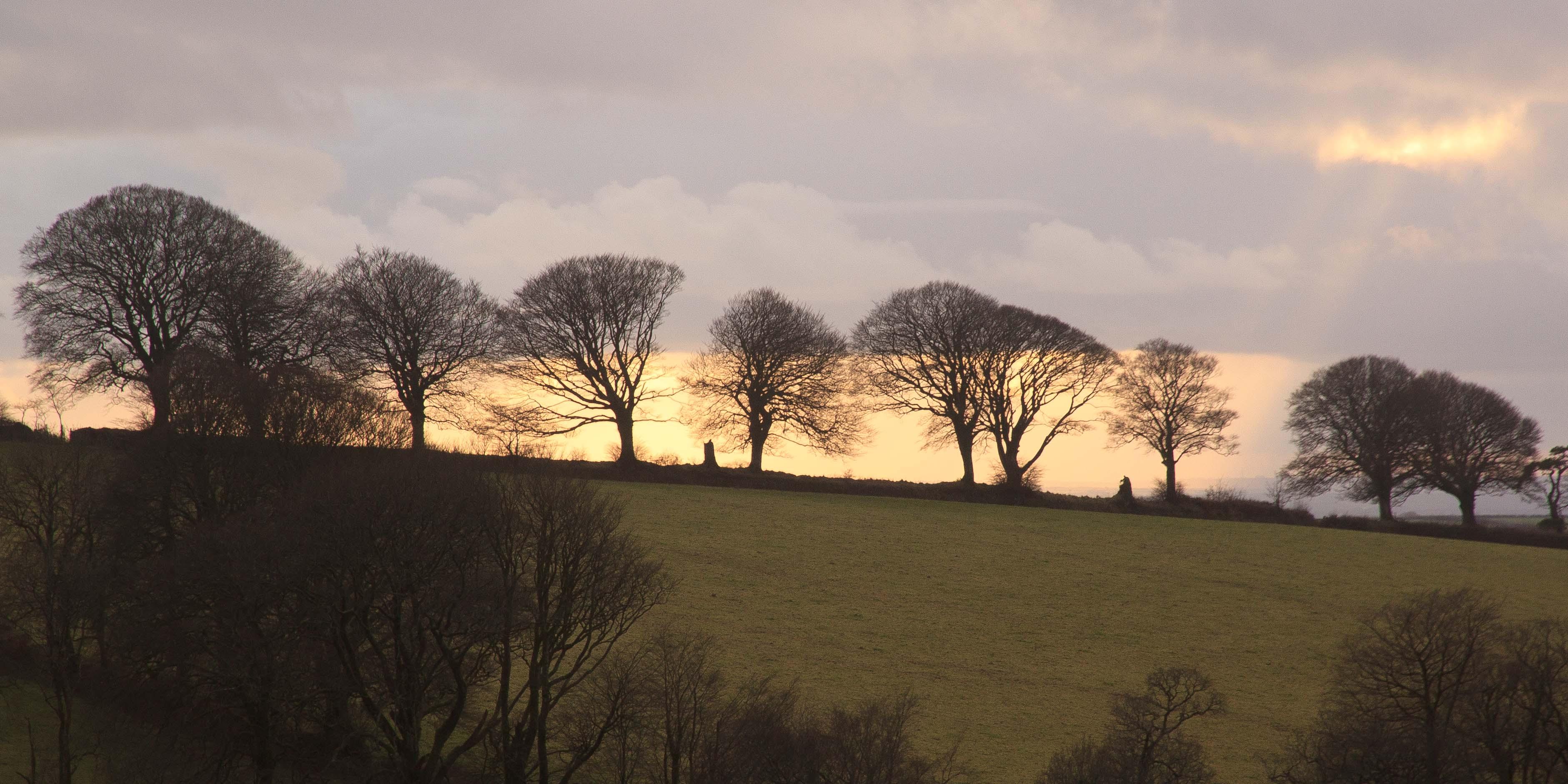 Trees silhouetted against the setting sun near Arlington Court, North Devon. Jan 2015