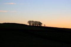 Exmoor Trees against the evening sky near Challacombe