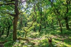 Woodland in the Doone Valley on Exmoor