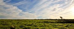 Lone windswept tree on Exmoor near Challacombe