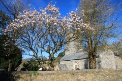 St George's Church with Magnolia tree in March