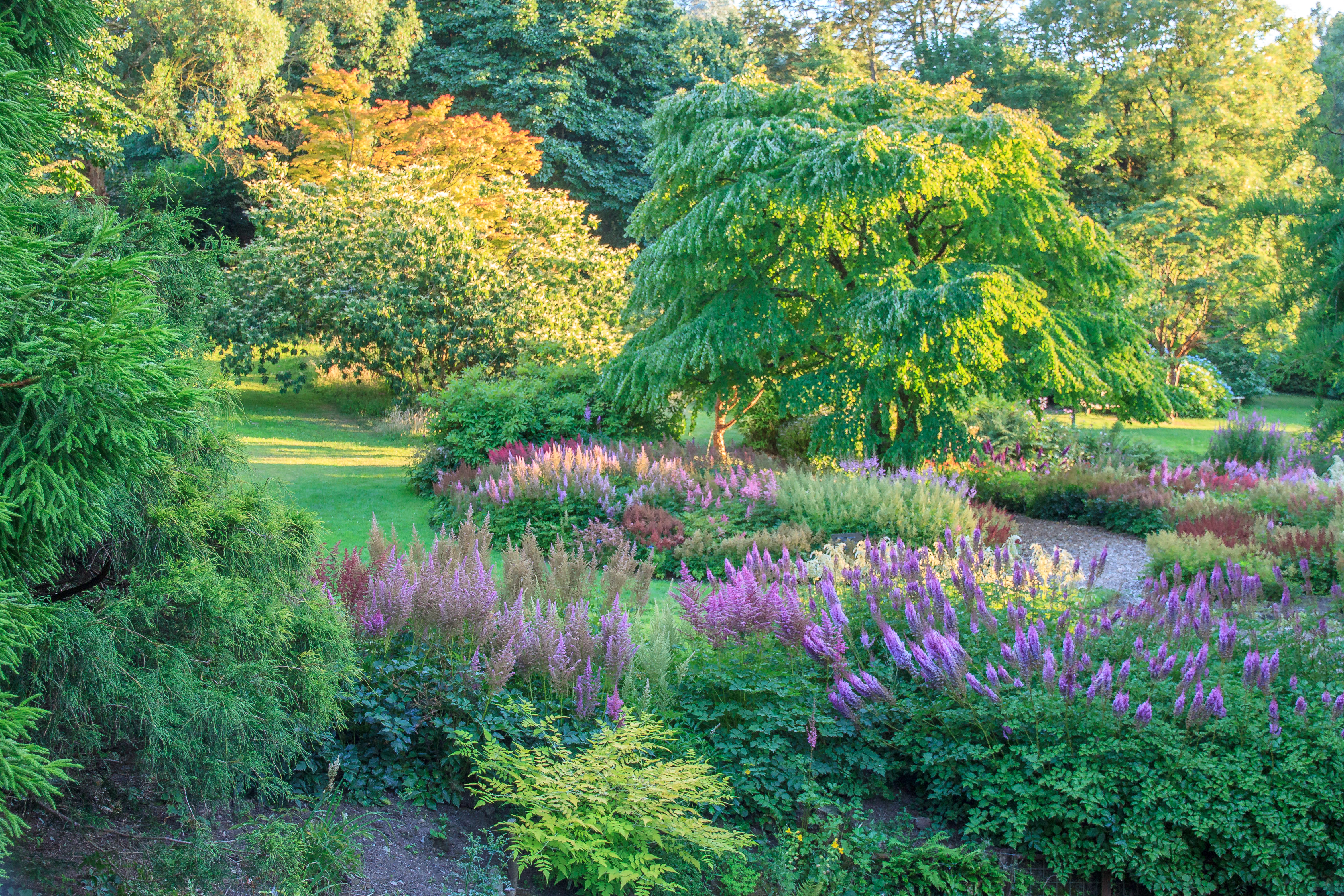 Marwood Hill Gardens, August 2018