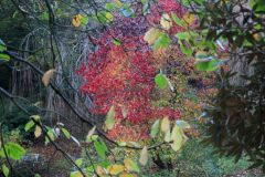 Autumn leaves in Marwood Hill Gardens