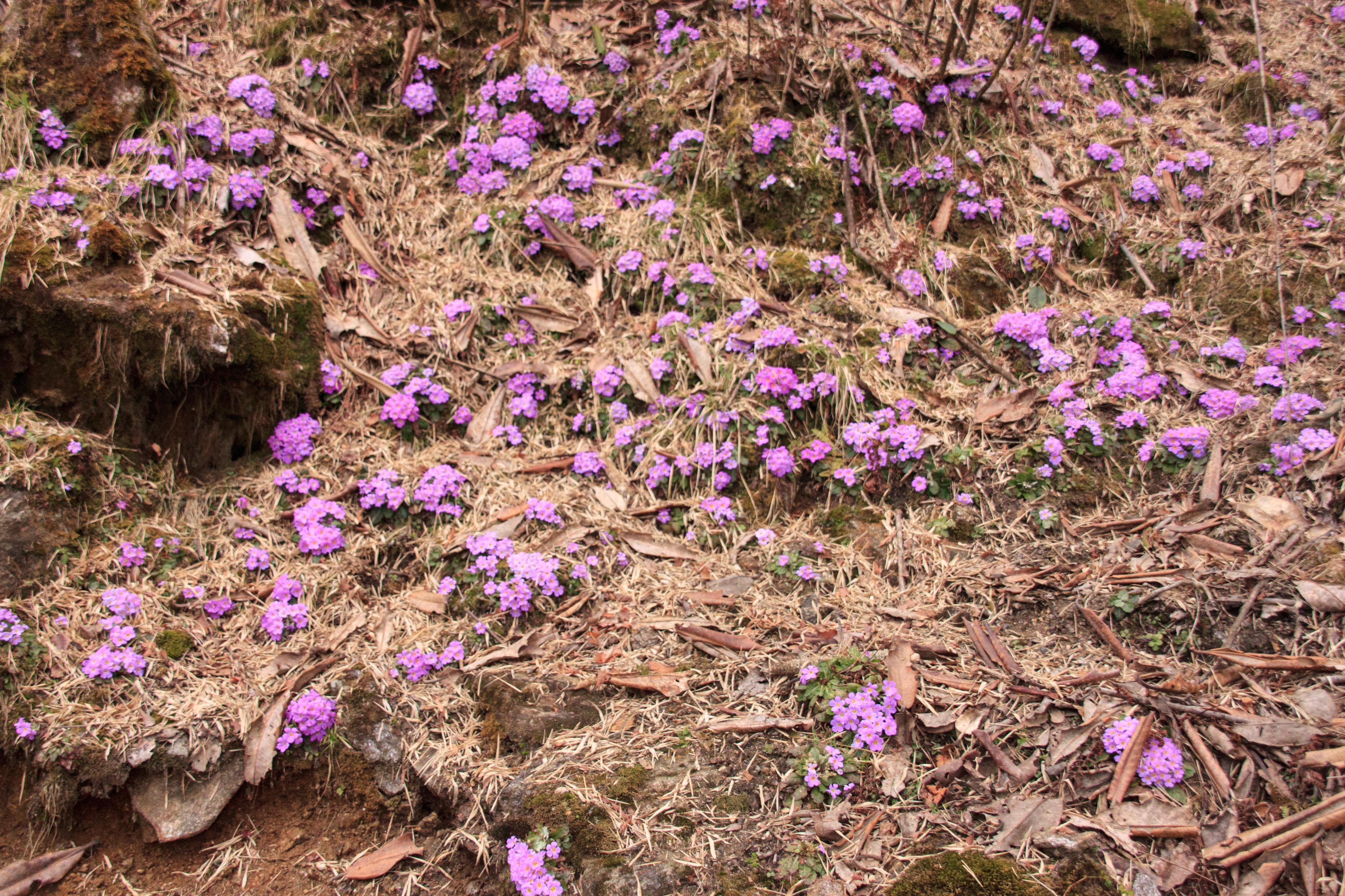 Wild woodland flowers