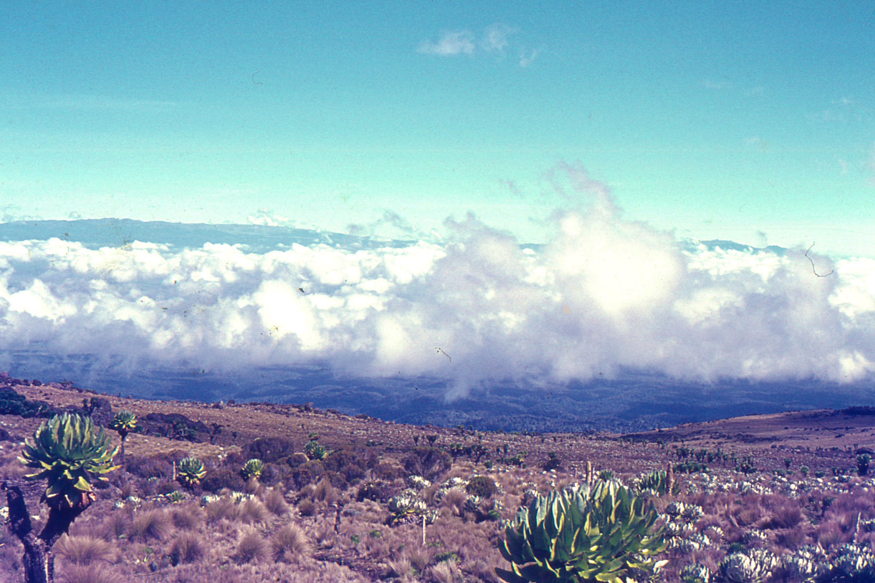 Mt-Kenya-1971012_Low-Res