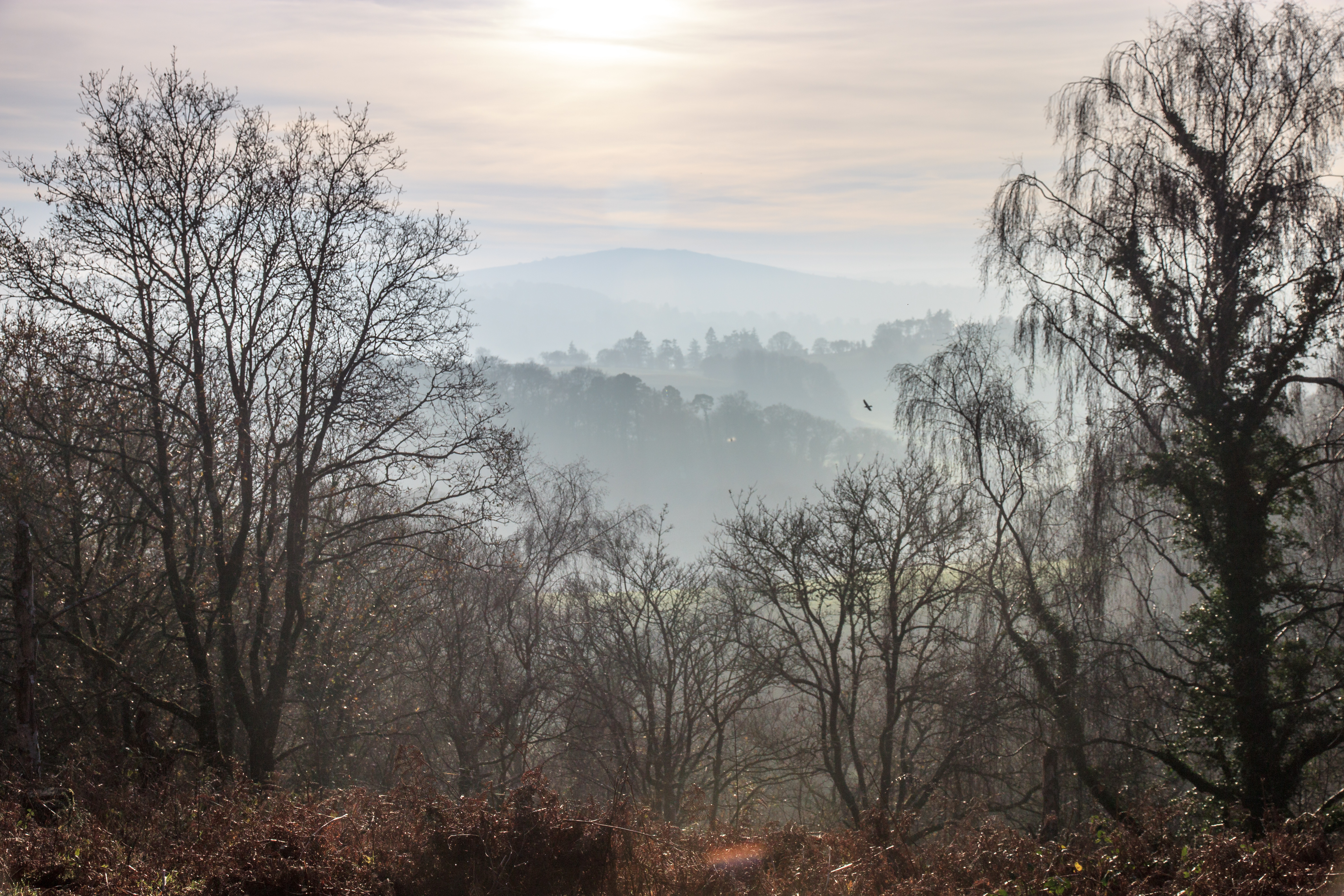 View towards Dartmoor from above the River Teign Gorge