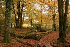 Chapel Wood near Georgeham