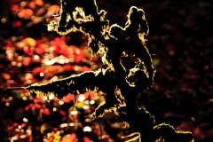Lichen on Trees on Exmoor  in the autumn