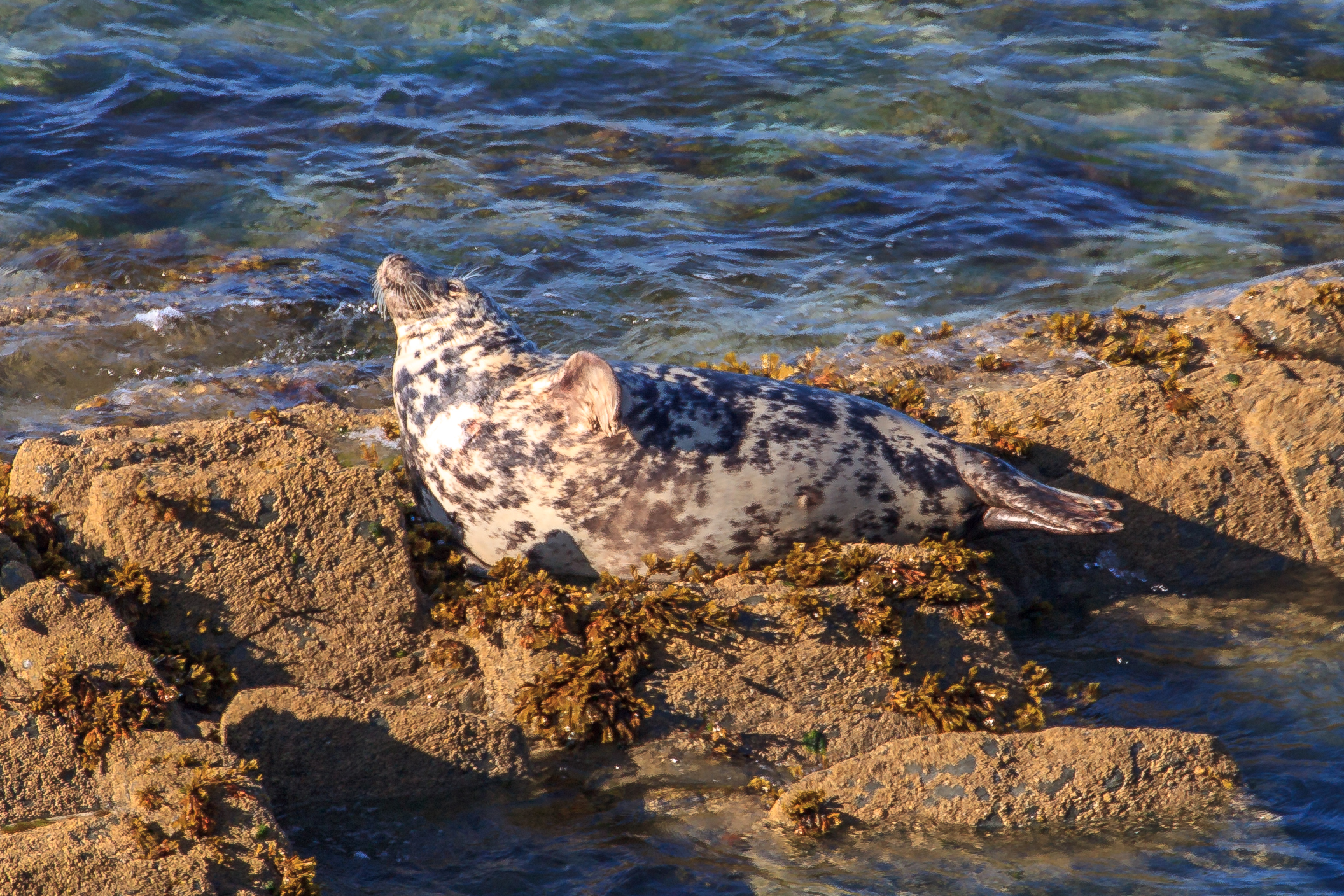 Seal Off Morte Point