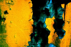 yellow-rust2