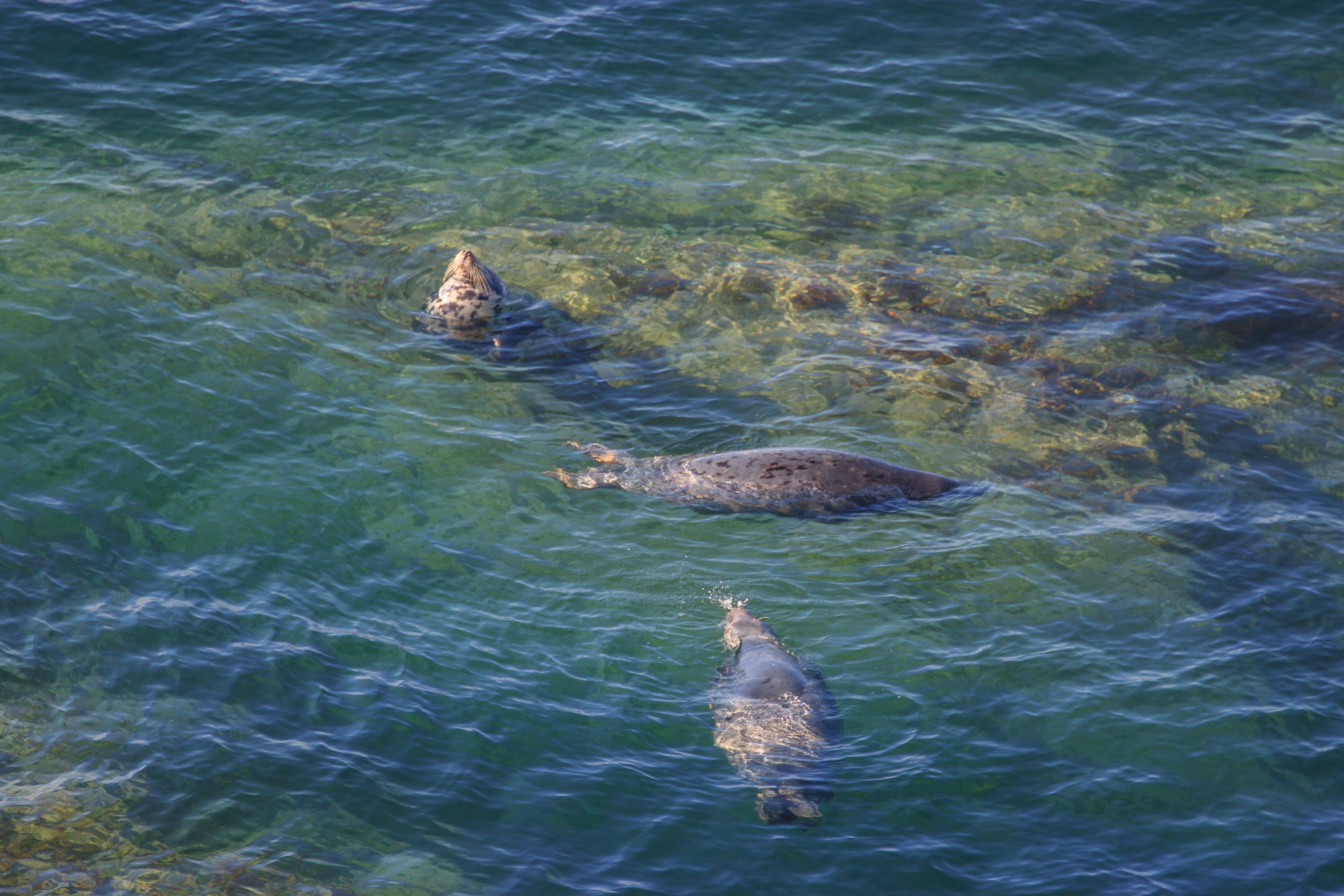 Seals Off Morte Point