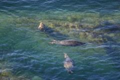 Seals Off Morte Point