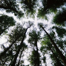 Look to the sky between the trees of Prior's Wood near Bristol