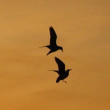 Sea gulls against a golden sky