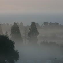 Early morning mist amongst the trees at Ashton Court, Bristol