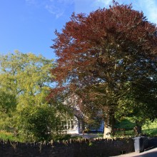 Trees at Forda between Croyde and Georgeham