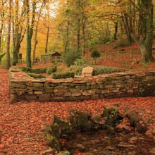 Chapel Wood RSPB site near Georgeham in November