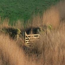 Field gate among the reeds near Rockham Bay