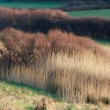 Grass reeds in fields near Rockham Bay