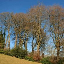 Trees above Wheddon Valley, Exmoor, in February