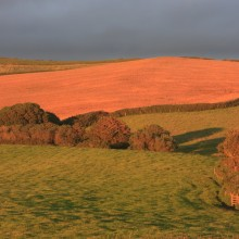 Fields above Putsborough lit by a golden setting sun in July