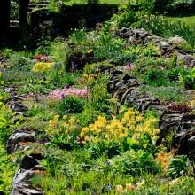Marwood Hill Gardens, May 2013