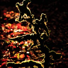Moss covered branch back-lit by the sun