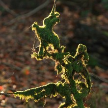 Moss branch back-lit by the sun