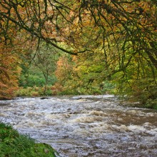 Autumn on the River Barle near Dulverton, Exmoor. October 2013