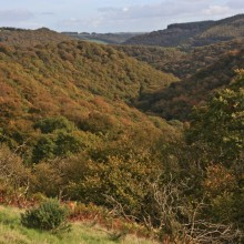 Autumn colours on Exmoor near Dulverton