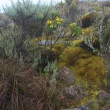 Vegetation along the