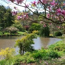 April: Marwood Hill Gardens