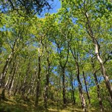 Woodland at Watersmeet near Lynton