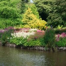 Astilbe's by the lake at Marwood Hill Garden in July