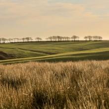 Row of trees on horizon on Exmoor near Challacombe