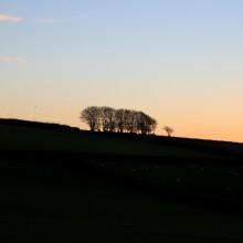 Exmoor Trees against the evening sky near Challacombe
