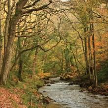 November: East Lynn River near Watersmeet