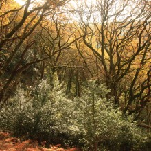 Trees above the East Lynn River in their autumn colours. November 2013.