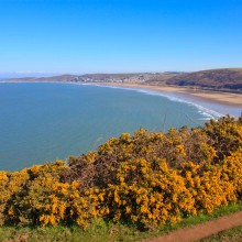 Woolacombe/Putsborough Beach in late March with Gorse in full bloom. Taken from walk to Baggy Point. 21 March 2015.