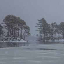 Trees on island on Loch Ossian