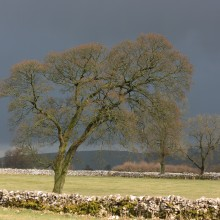 Tree during storm in Peak District, March 2018